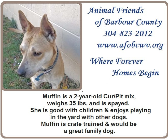 This image has an empty alt attribute; its file name is Ad-11-18-19-Muffin.jpg