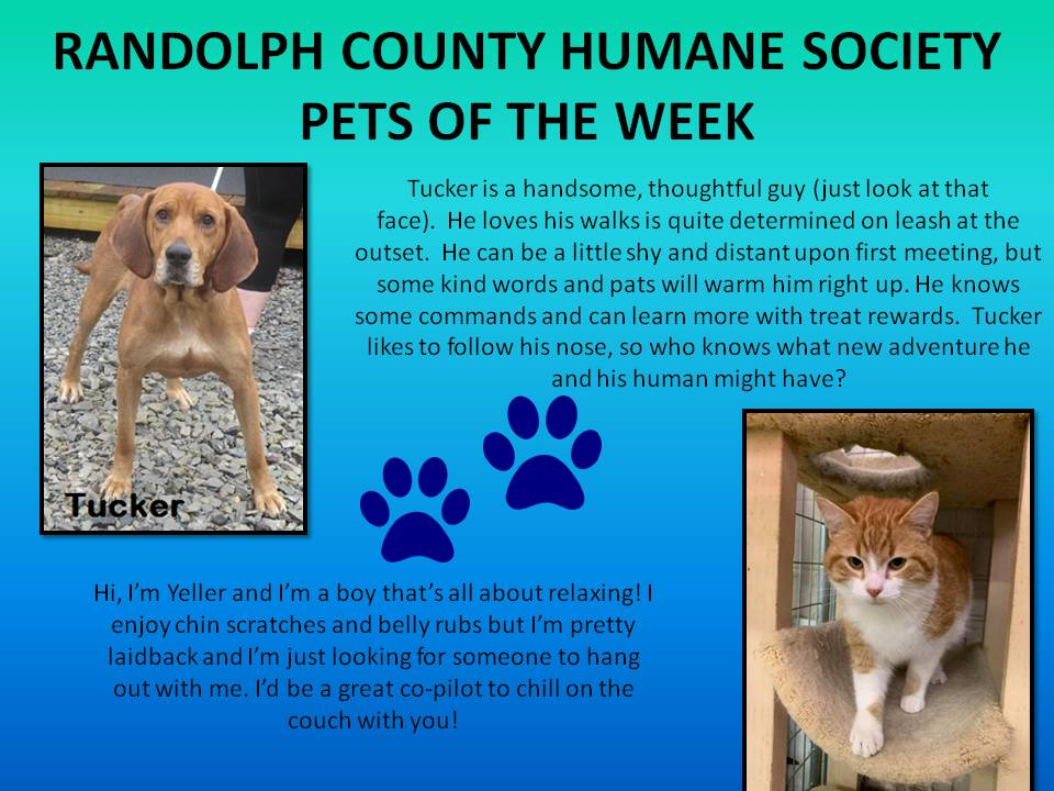 This image has an empty alt attribute; its file name is RANDOLPH-COUNTY-HUMANE-SOCIETY-78.jpg
