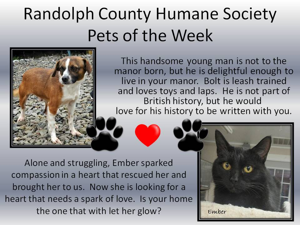 This image has an empty alt attribute; its file name is Randolph-County-Humane-Society-5.jpg